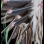 Plains Feather War Bonnet 3005.19.01 (photo 11) ☩ «4 Colors»™